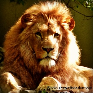 The Lion of Judah secures our freedom from sin.