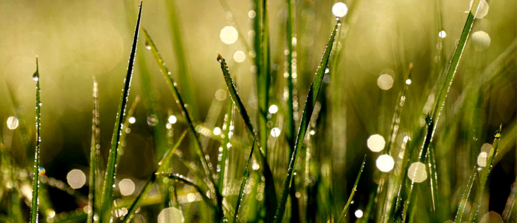 Like the morning dew, hope clings to the thirsty soul.