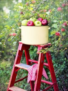 If Trees Could Talk-apples on a ladder in front of a tree