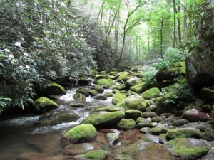 Our National Treasures--Smoky Mountains