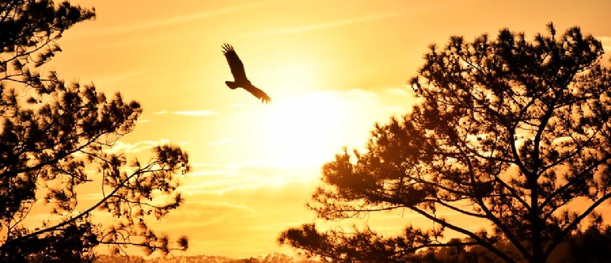 how to soar like an eagle